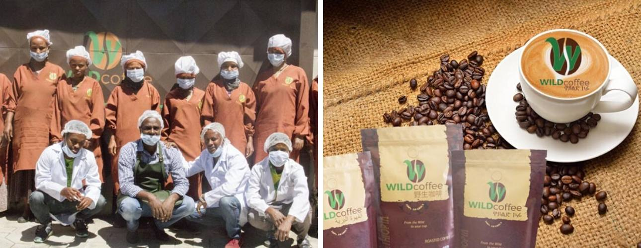 Wild Coffee Ethiopian coffee